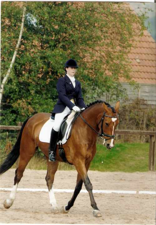 world young horse dressage