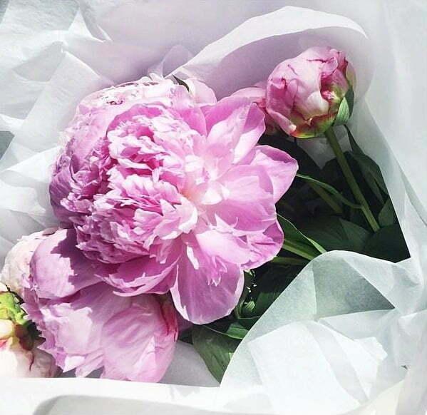 bujori roz