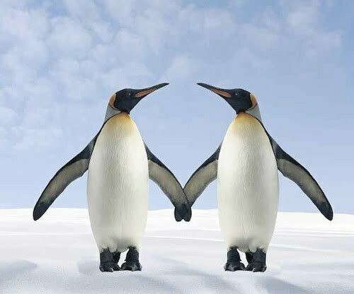 two-penguins-holding-hands-fuse