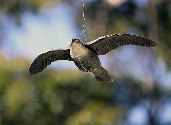 pasăre