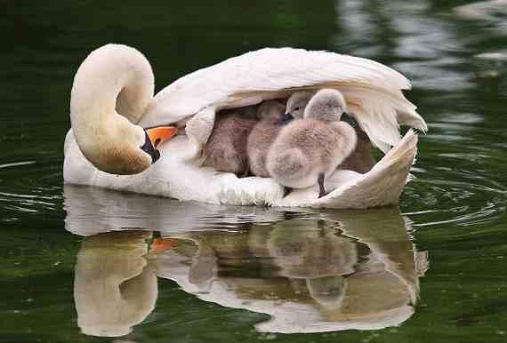animal-parents-2-Copy