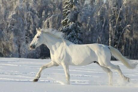 White-Horse2