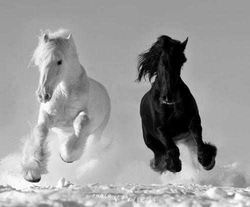 cai fericiți