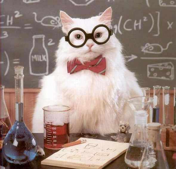 experiment-cat-scientist