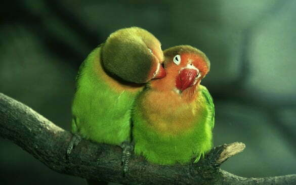 primul-sarut
