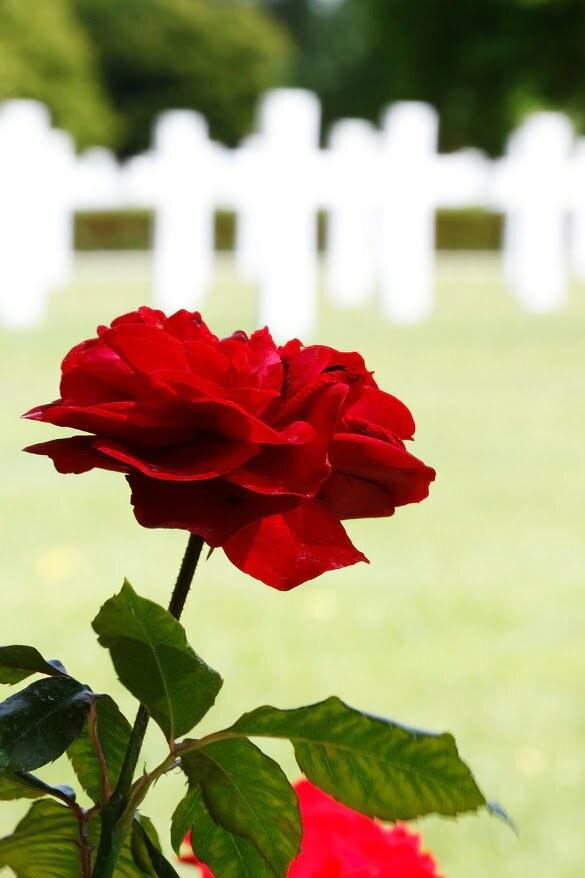 La moartea unui jurnalist anonim