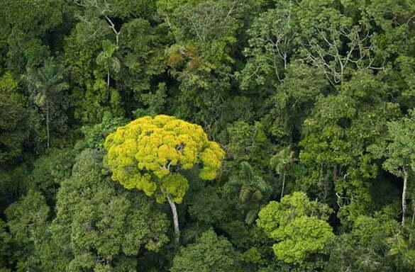 ecuador-breaks-guiness-record-reforestation-670