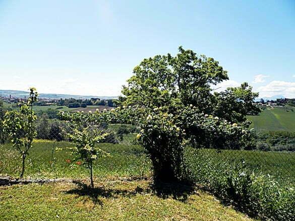 grădină Italia