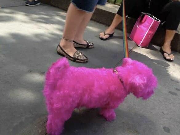 hot-pink-dog