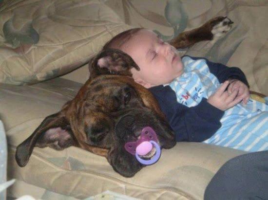 bebe doarme pe caine
