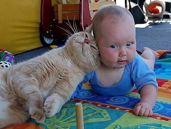 bebelus si pisica