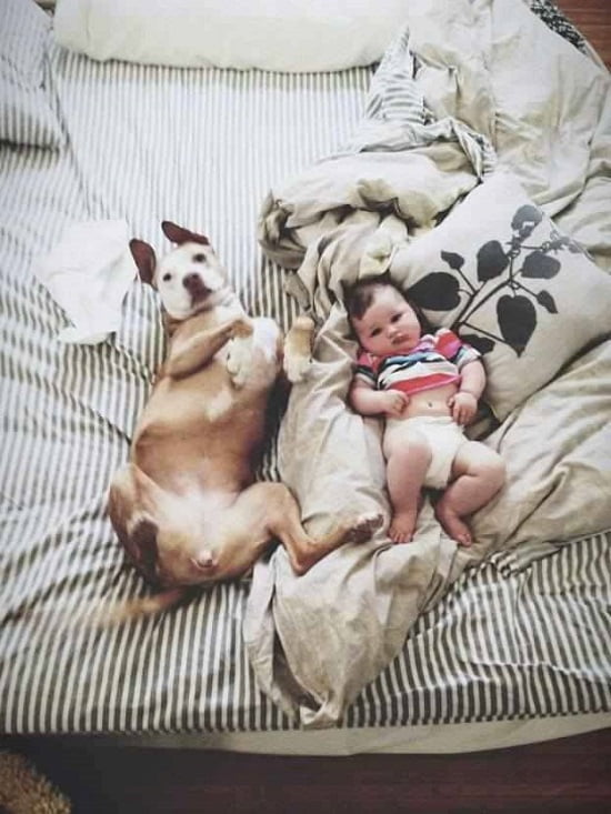 caine si bebelus