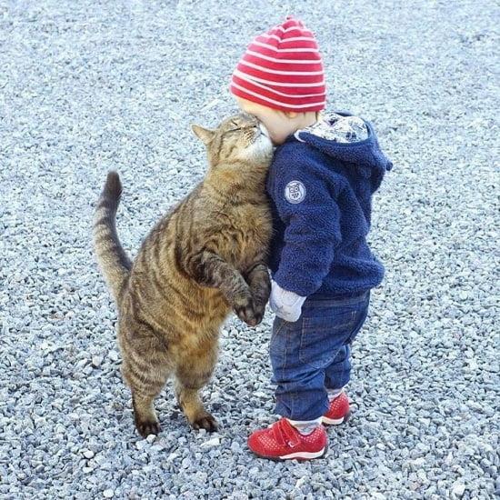pisica copil2