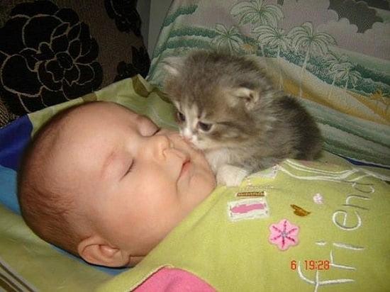 pisica si bebelus