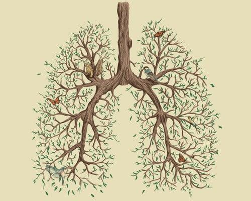 respiratie