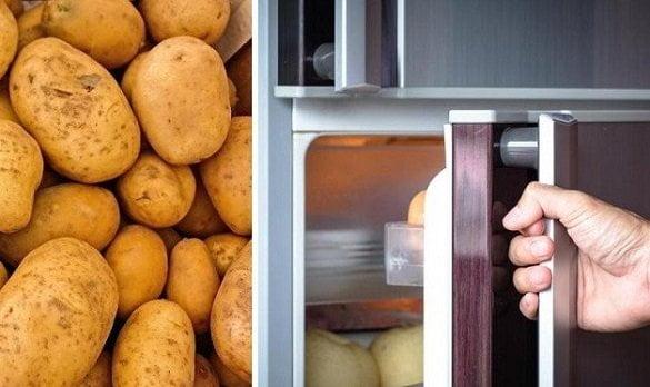 cartofi frigider