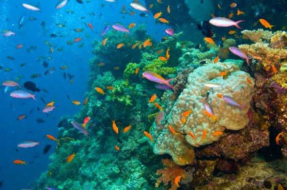 marea-bariera-de-corali8