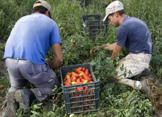 Romani-muncitori-la-agricultura-in-Italia