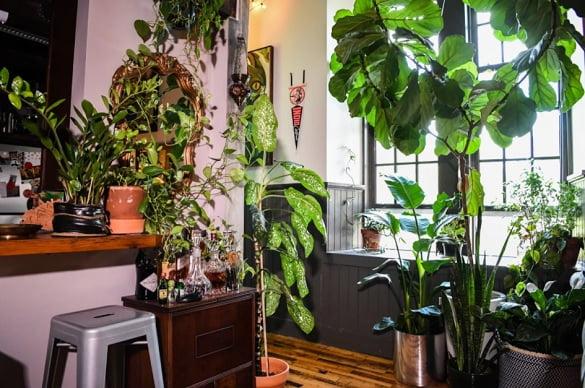 plante de apartament 2