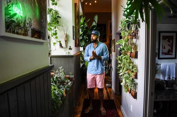 plante de apartament1