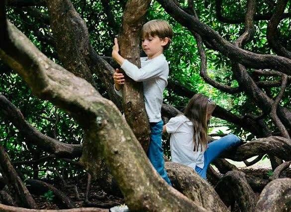 copii copac