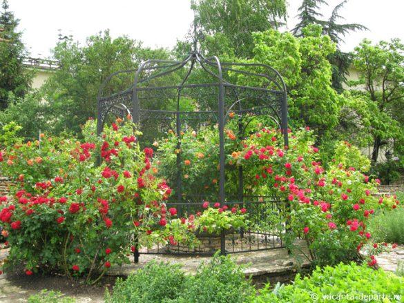trandafiri-Gradina-Botanica-Balcic