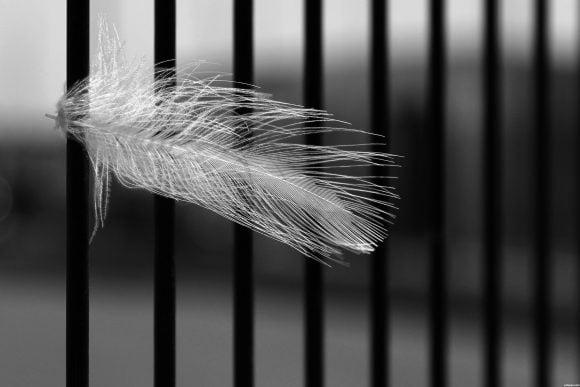 Behind-bars-505b8a9287b40_hires