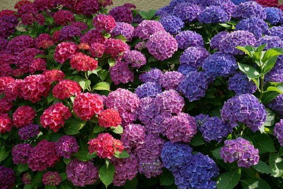 flowers-2062232_1280