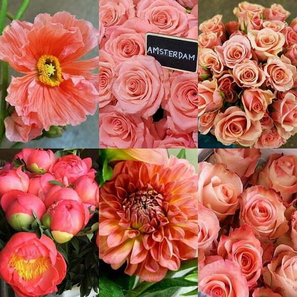 pantone flori